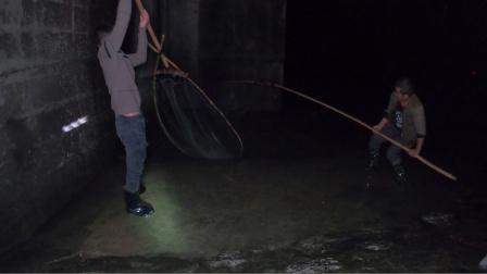 很少遇见冬天来了还会发洪水,小伙用大抄网去河边捞了很多黄刺鱼