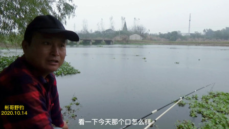 昨天的窝子,今天来钓口还是很猛,要不是下雨降温又能钓不少