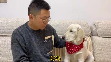 狗狗的说法,你认同嘛?
