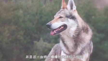 狗狗被主人打的时候,为啥从来不会反抗?专家给出解释!