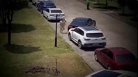 公司女白领侧方位停车怎么也进不去,真是无语