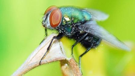 苍蝇怎么灭