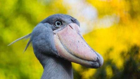 世界最可爱的鸟,简直萌翻了