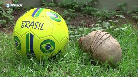 """男子意外捡到一个""""球"""",引来路人围观,仔细看后不淡定了"""