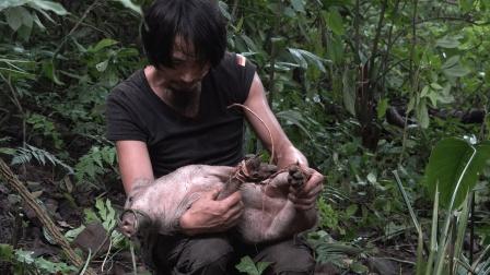 小伙丛林生存,狩猎一头小野猪,圈养起来过年杀肉吃
