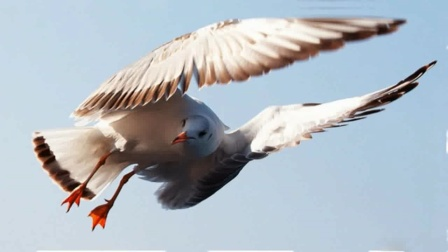昆明红嘴鸥2