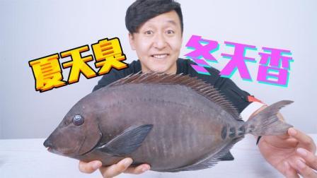 吃自动变味的三字鱼,夏天奇臭无比,冬天鲜美可口