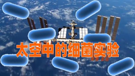 """国际空间站上的""""超级细菌""""实验,对我们有什么用?"""