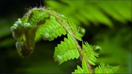 植物快速生长