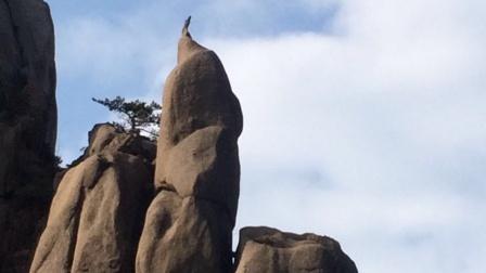 游黄山《下集》奇松 怪石