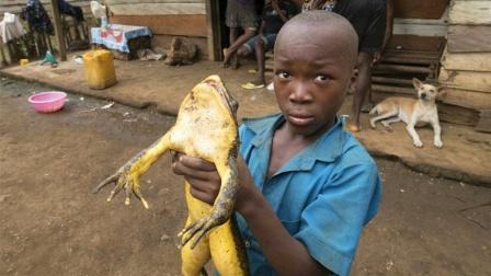 Top3地球上现存最大的巨型蛙类!