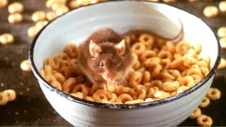 鼠年喜剧:这只老鼠价值千万美金,因为它的智商超过人类!