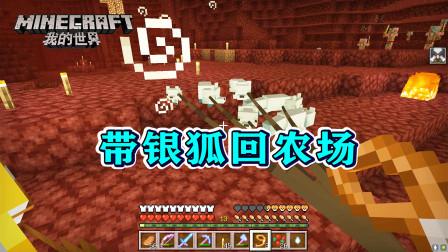 我的世界286:把银狐带回农场!这次赚大了,找到3种新动物!