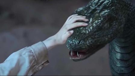 蛇王:小女孩救下一只小蛇,二十年后蛇长大回来报答救回她一命