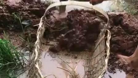 农村人想吃鱼,把神器一放就有美食