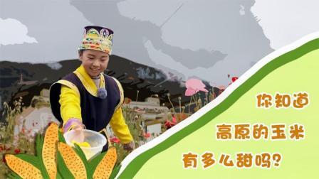 高原玉米有多甜?藏族小朋友邀你一起过林卡