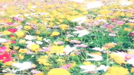 赏花听歌一花一草一世界,过好余生的每一天