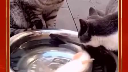 你们是在协商怎么把这条鱼吃了吗