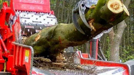 世界上最厉害的木材粉碎机,它的工作效率有多高?粉末说明了一切
