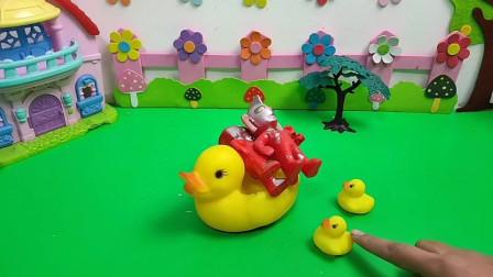 小鸭子也要快快长大帮助妈妈!