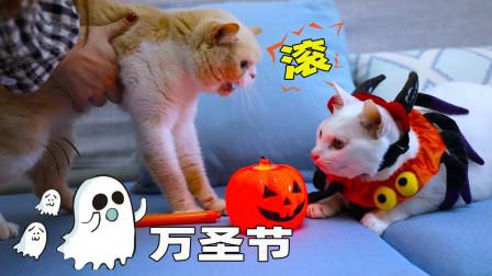 把猫扮成万圣节妖怪,其他猫还认识它吗?猫:怪物!