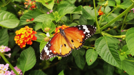 衡州蝴蝶展览馆你看过吗?神采各异的蝴蝶吸引了众多摄影爱好者!