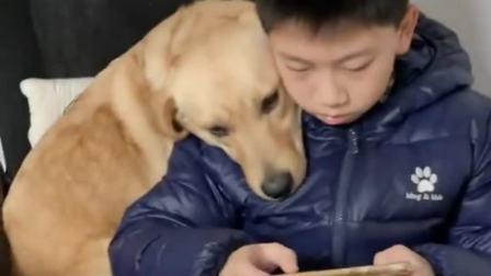 家里有孩子定要养只狗,偶然看到,真不忍心破坏这么温馨的一幕