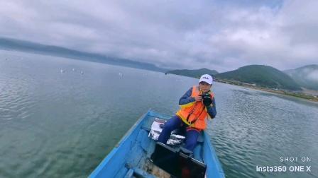 西昌泸沽湖,飞来一群西伯利亚海鸥!