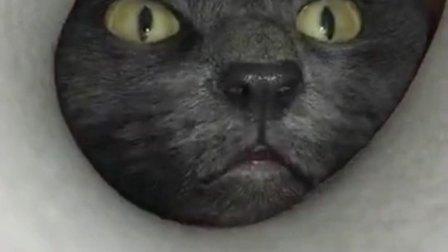 吓得我赶紧把我家猫从睡梦中拽起来打了一顿