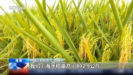 袁隆平解读:第三代杂交水稻好在哪?今年又有什么小目标?