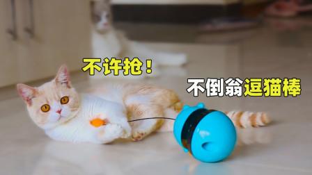 不倒翁自动逗猫棒,为了玩5只猫差点打起来!猫:解闷神器!