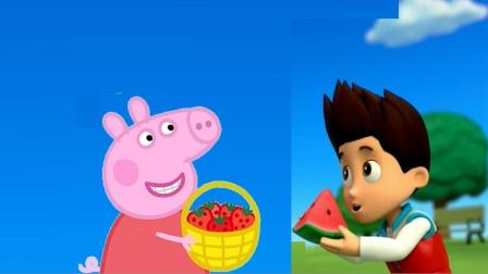 小猪佩奇最新第八季 和汪汪队的莱德队长交换水果 简笔画