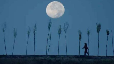 老歌新唱 |《月亮之歌》民谣经典,质朴最动人~