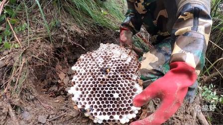 小亿在野外挖了两窝蜂,最后看到收获直接无语
