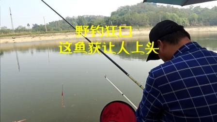 野钓狂口,连杆上鱼3个小时,最后鱼获让人上头