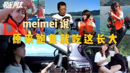 最近周末|meimei说原来鲍鱼就吃这长大