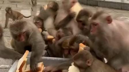 下了一天的暴雨,猴子太饿了