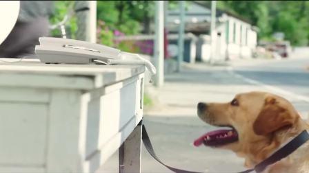 小偷把偷来的狗拴在电话旁,可这只狗居然会打电话报警