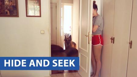 和家里的宠物捉迷藏有多好玩?老外亲测告诉你答案,网友:差点笑哭