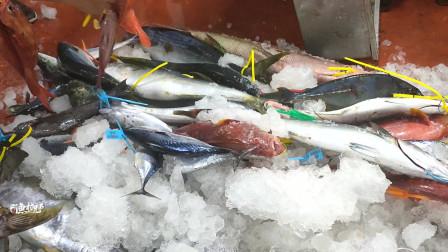 海钓:50斤重大金枪鱼1条接1条,接近2000斤鱼获,发财了