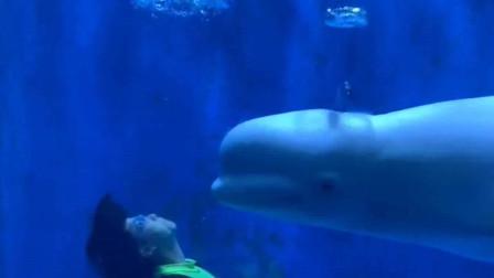 和白鲸小黑比赛吐圈圈!白鲸赢了,向饲养员索要抱抱!