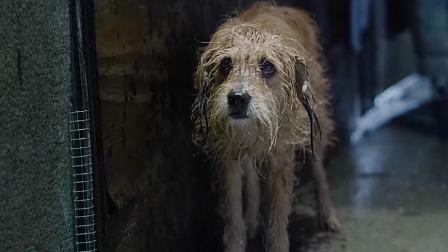 男孩在街上收留了狗狗,却被妈妈扫地出门