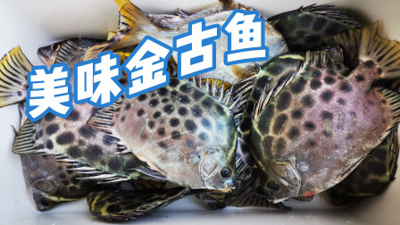 珠海特产金鼓鱼,鱼鳍有毒刺到要哭爹喊娘,但是味道却非常鲜美
