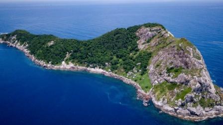 直击世界最危险的蛇岛 登岛就丧命 你敢去吗?