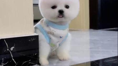 宠物:狗狗:你为什么这样看着我? 是不是我太可爱了