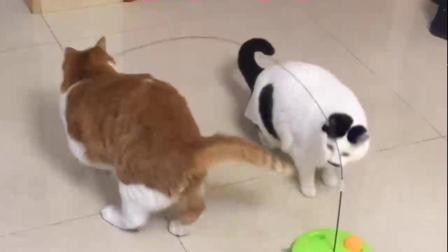 宠物:猫咪:你一记无情脚把我踹回现实,还打了个滚儿