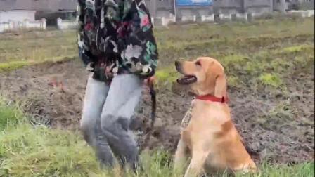 宠物:狗狗:你要下水可以,但是别拖着我呀