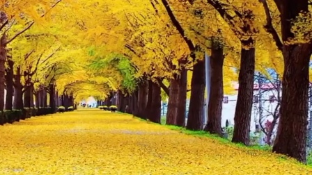秋风.秋叶.秋草黄
