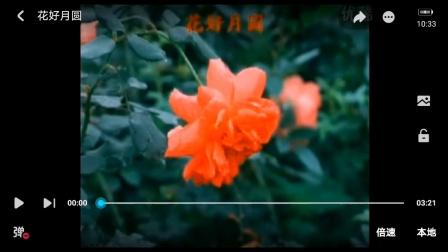 徐小凤 花好月圆