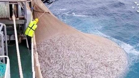 堪称全球上最大的渔船!耗资高达4亿元,捕鱼过程无比壮观!